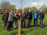 tree planting by Friends of Hayworth Road Park